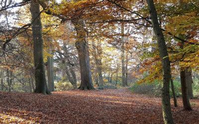 Hello Autumn! Read our Autumn Newsletter
